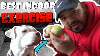 Фото BEST Indoor Exercise For Pit Bulls (American Bully Training)