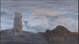 Chú chó đáng thương ngày ngày ngồi mỏm đá đợi người chủ mất tích trong cơn bão biển
