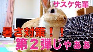 【おもしろぺットうさぎ】うさぎの暑さ対策で大パニック!? thumbnail