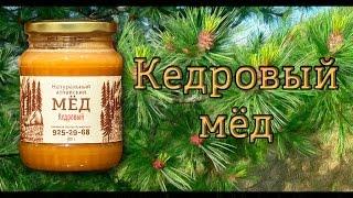 Алтайский мёд – Кедровый