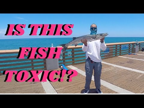 THESE FISH CAN HOSPITALIZE YOU!!!(Ciguatera  Fish Poisoning Explained)