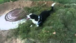 Моя собака в траве!!(прикол)