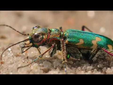 Жуки МОНСТРЫ в познавательном видео про насекомых