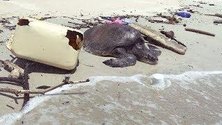 Пугающая находка: океан погибает от миллионов тонн мусора