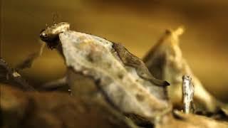 Скорость жизни  Красота и жестокость природы  Молниеносные атаки хищников  Discovery HD 29 11 2016