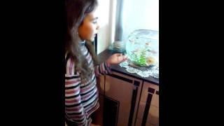 как ухаживать за аквариум иными рыбками