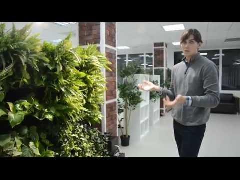 Павел Ермаченко и его зеленая стена