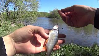 Рыбалка на поплавочную удочку весной.Рыбалка весной в окружении Змей !!!
