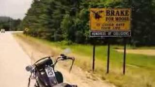 BIKER LIFE /     Ride Hard-Die Free
