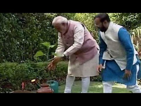 On World Environment Day, PM Modi plants a sapling