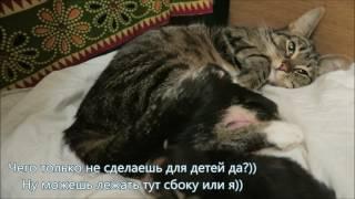 Влог кошки 3. Кошка не хочет спать сама после рождения котят. Веселый зоопарк и теснота у нас дома))