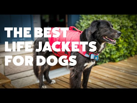 The Best Life Jackets For Dogs | Rover.com