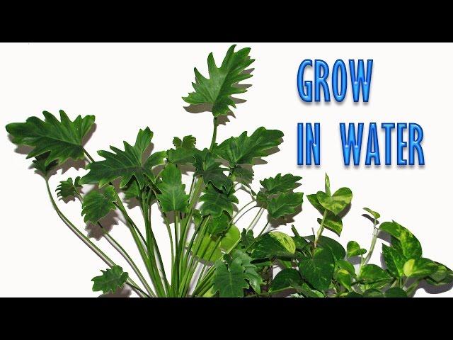 The Best Indoor Plants That Grow In Water