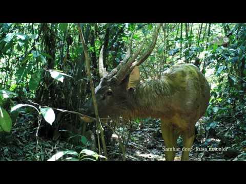 Rainforest Inhabitants caught on Camera Trap