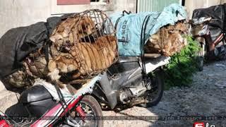 Vietnam dog thieves, fence jailed