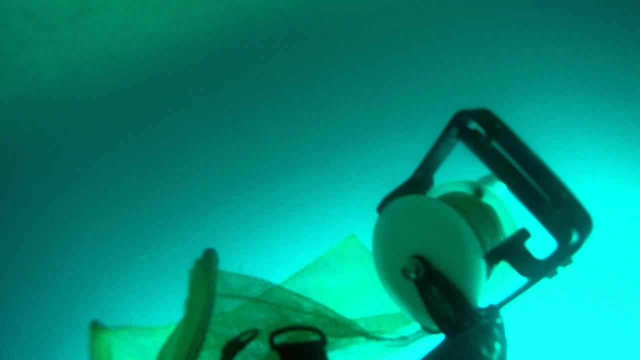Gigging A Flounder Va Beach Dive