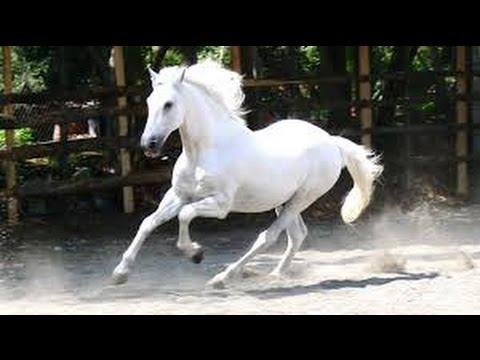 Beautiful White Horses Youtube