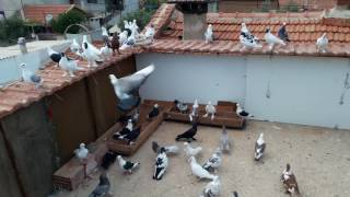 Manisa Salihli Güvercin Kümesi Ziyareti