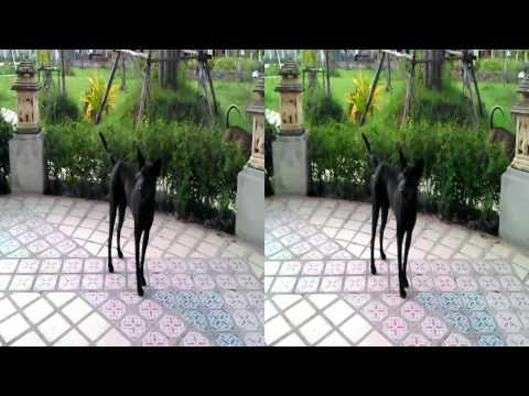 VDO 3D by HTC Evo 3D (Dog)