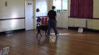 Rally Obedience Dog Training