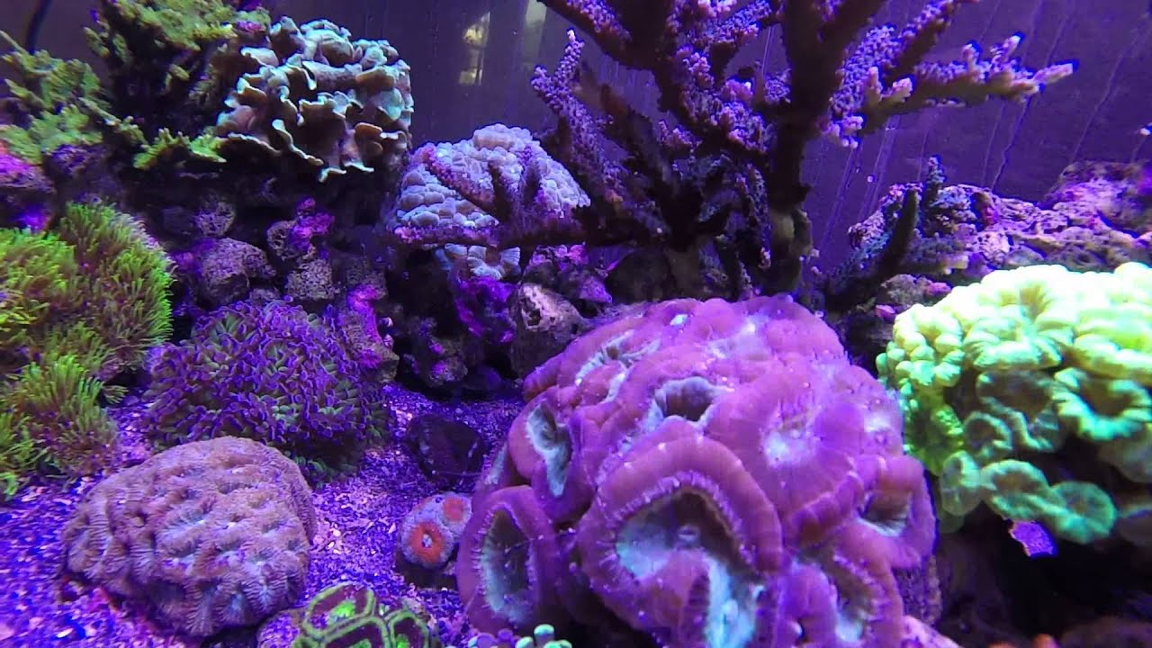 Aquarium eau de mer recifal reef tank youtube for Aquarium eau de mer
