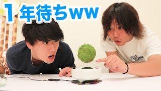 【入手困難】浮きながら高速回転する植物を育てますwww thumbnail