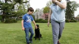 Kids And Dog Training