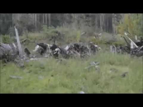 Улан-удэнец поехал с семьей отдыхать на Байкал и пришел в ужас от увиденного