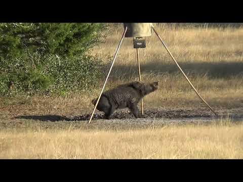 South Texas Hunting – Kill Compilation