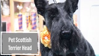 How To Do a Pet Scottie Head   with Master Groomer