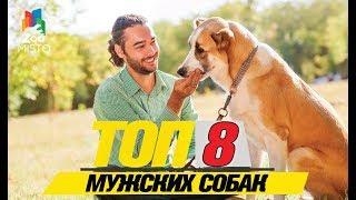 Топ 8 мужских собак \ Top 8 males dogs