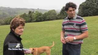 Dog Training Tips - Strictly No Shock Collars For Dogs Required.