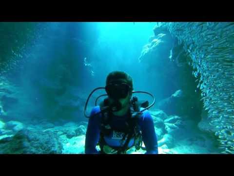 GoPro: Fish Fantasia | Beautiful HD Scuba Diving Edit