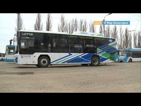 Новые автобусы на улицах Белгорода
