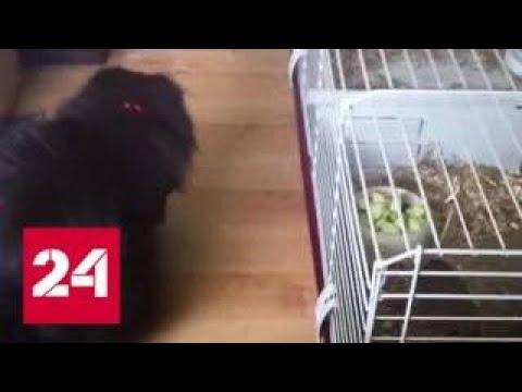 Заметают следы: британские спецслужбы избавились от животных семьи Скрипалей - Россия 24