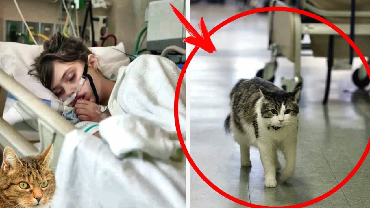 طلب قط المشفى الذهاب الى المريض ولاحقا انتشرت قصته حول العالم