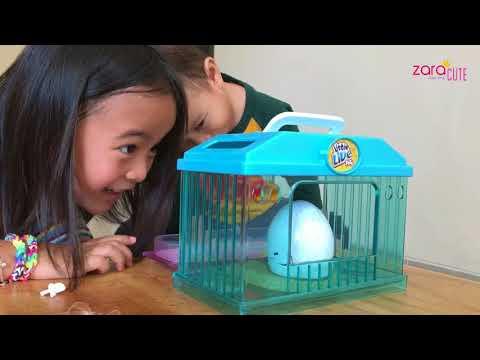 Unboxing Little Live Pets Chick | Egg Surprise | Zara Review Mainan Anak | Lets Play