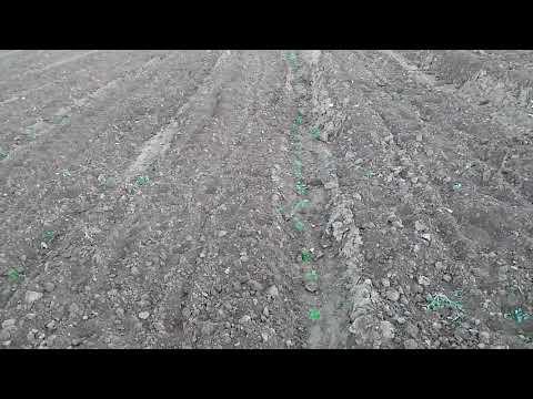 Naif Tarla - Ekolojik tarımda bitkisel üretim.