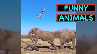 FUNNY ANIMALS JUNE 2020 Episode -1- | ULTIMATE FUNNY EN FAILS