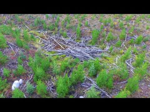 UAV Silviculture Survey - Interior BC