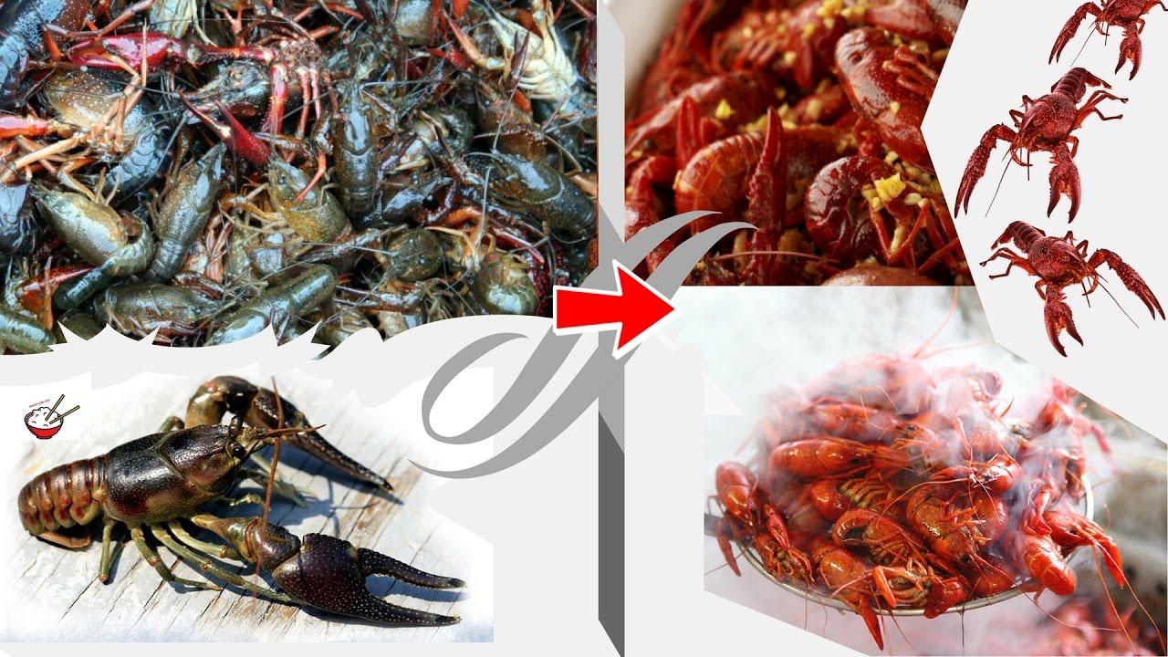 tm-hiểu-v-thưởng-thức-crawfish-đặc-sản-của-louisiana