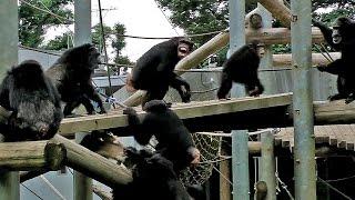 多摩動物公園にて。2012年7月撮影)ブログもよろしくです http://manyam...