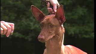 A video presentation of the AKC Pharaoh Hound Standard.