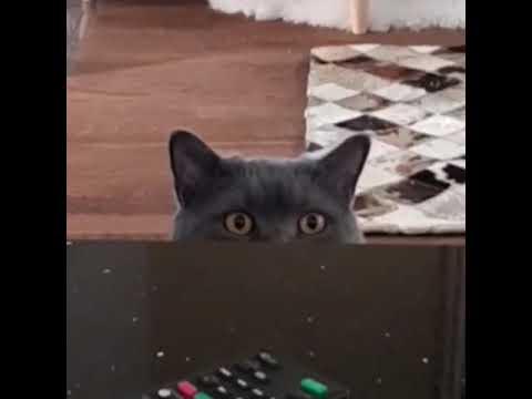 Kedi replikler