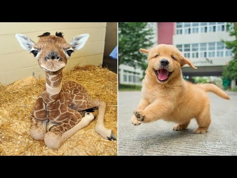 Baby Animals 🔴 Funny Cats and Dogs Videos Compilation (2020) Perros y Gatos Recopilación #12