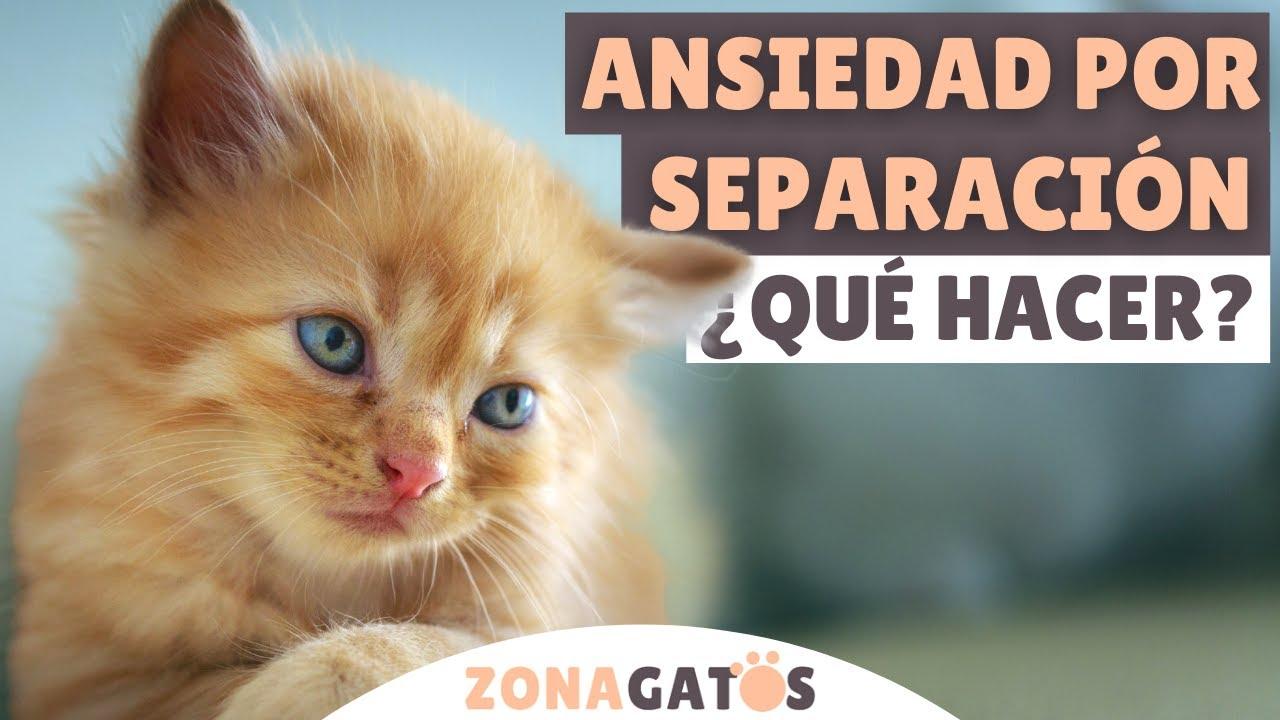 ANSIEDAD POR SEPARACIÓN en gatos ¿QUÉ HACER?
