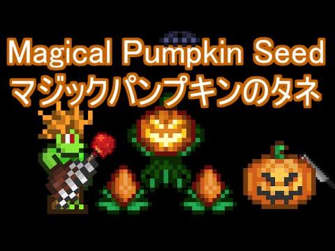 magical pumpkin seed