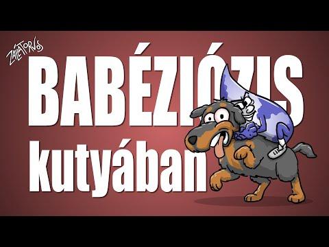 Babéziózis kutyában - csak egyszerűen