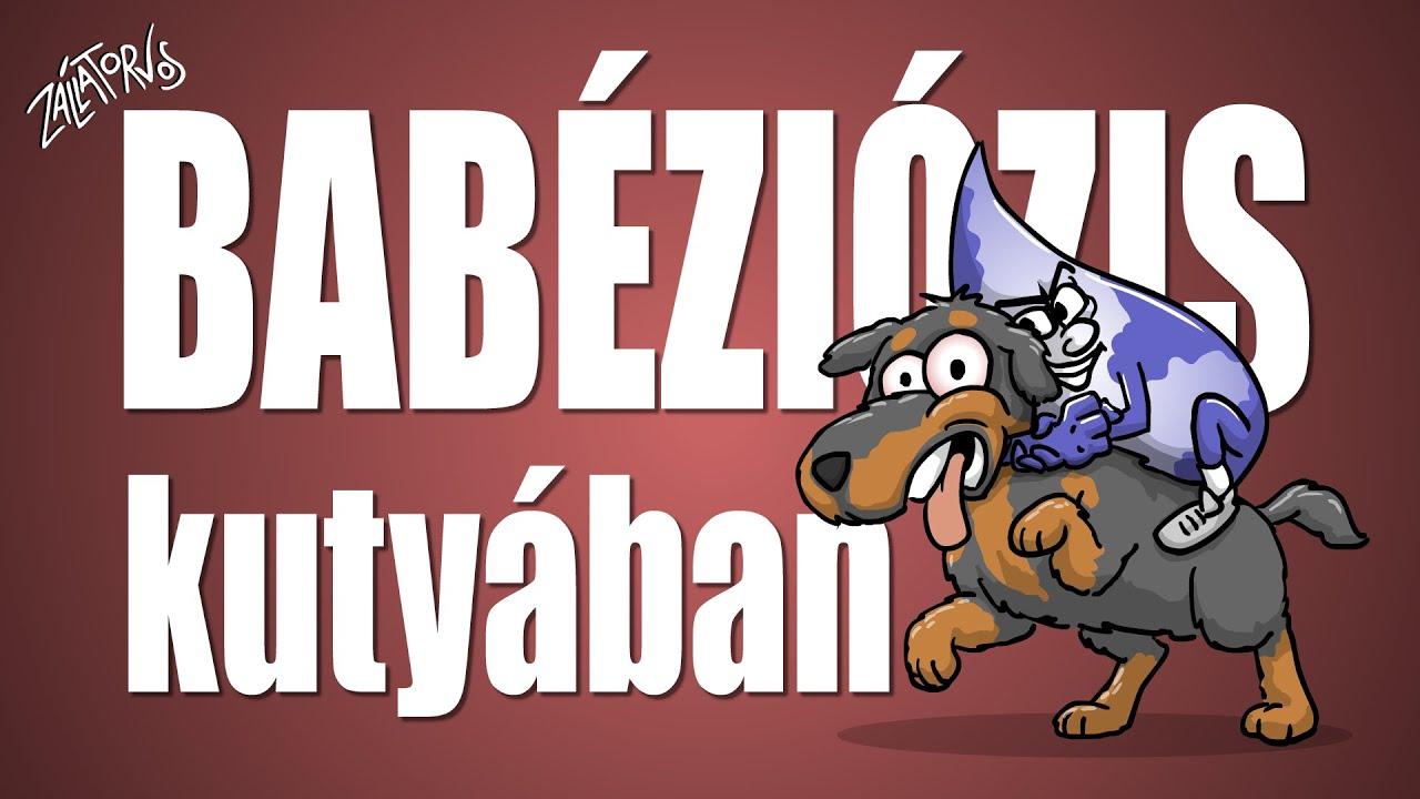 Babéziózis kutyában
