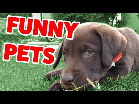 The Funniest Cute Pets & Animals Home Video Bloopers of 2016 Weekly Compilation | Funny Pet Videos